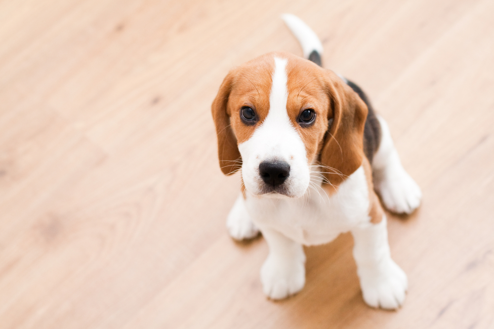 What Types Of Hardwood Flooring Are Best For Dogs Or Pets